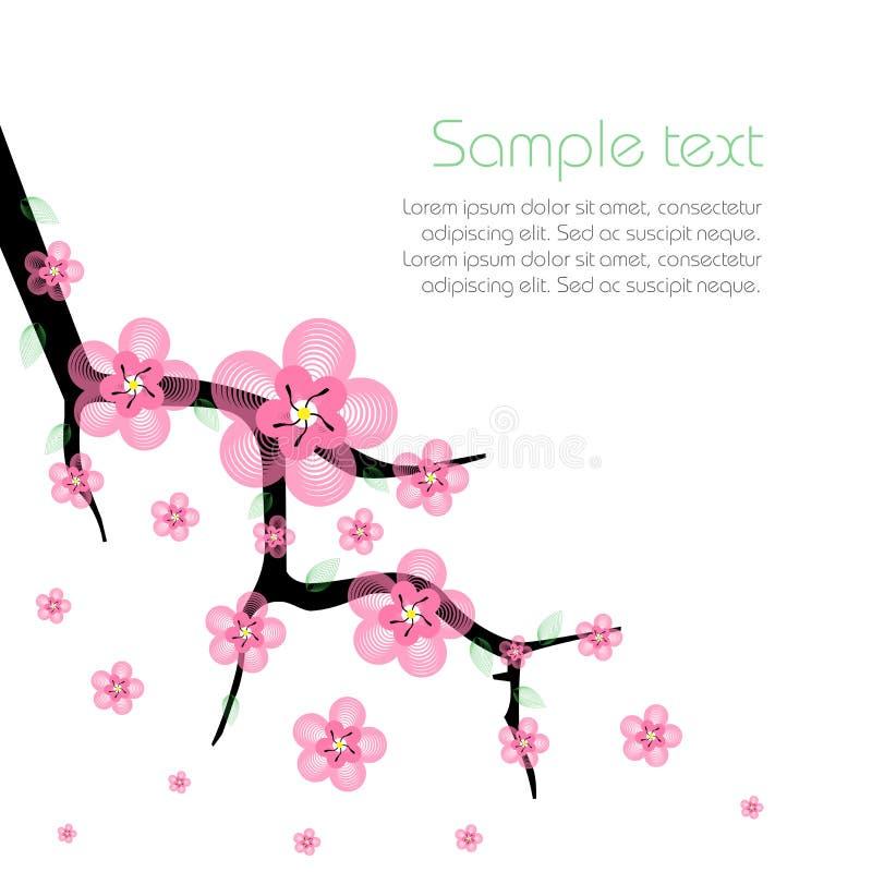 Ветви дерева весны Сакуры зацветая стоковые фотографии rf