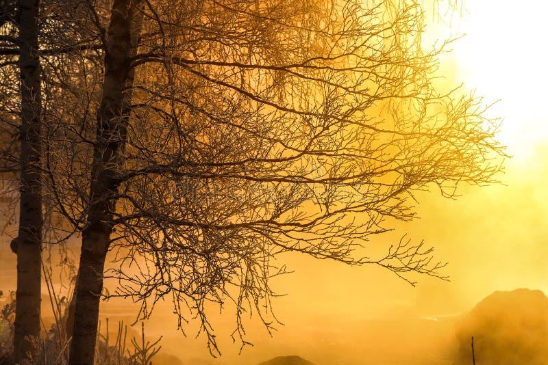 Ветви дерева в красивом солнечном свете стоковые фотографии rf