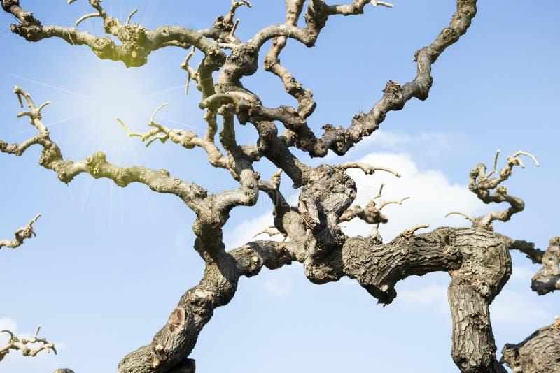 Ветви дерева и солнце стоковые изображения