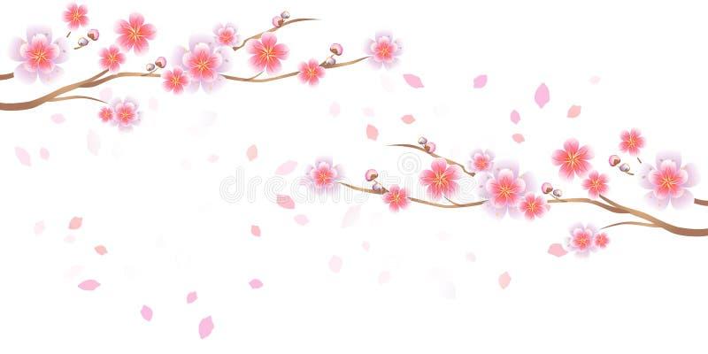 Ветви летать Сакуры и лепестков изолированный на белой предпосылке цветки Apple-вала Цветение вишни Вектор EPS 10, cmyk иллюстрация вектора