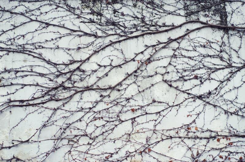 Ветви заводов на стене стоковое фото