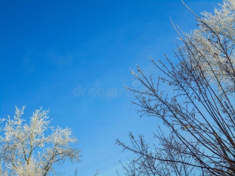 Ветви зимы снежные на предпосылке голубого неба стоковая фотография