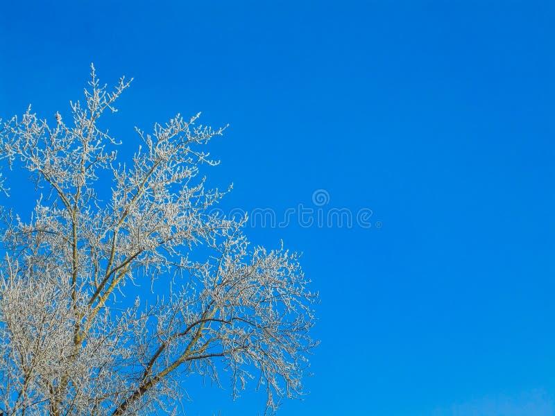 Ветви зимы снежные на предпосылке голубого неба стоковое фото rf