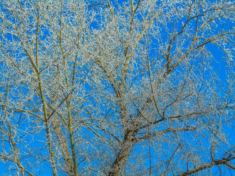 Ветви зимы снежные на предпосылке голубого неба стоковые изображения