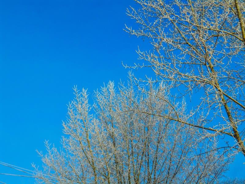 Ветви зимы снежные на предпосылке голубого неба стоковые изображения rf