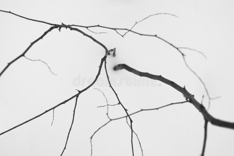 Ветви и снежок стоковые изображения rf