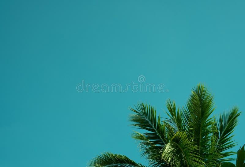 Ветви ладоней кокоса под голубым небом стоковое изображение rf