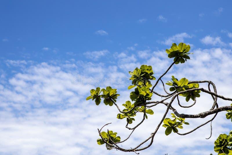 Ветви, листья и небо стоковое изображение rf