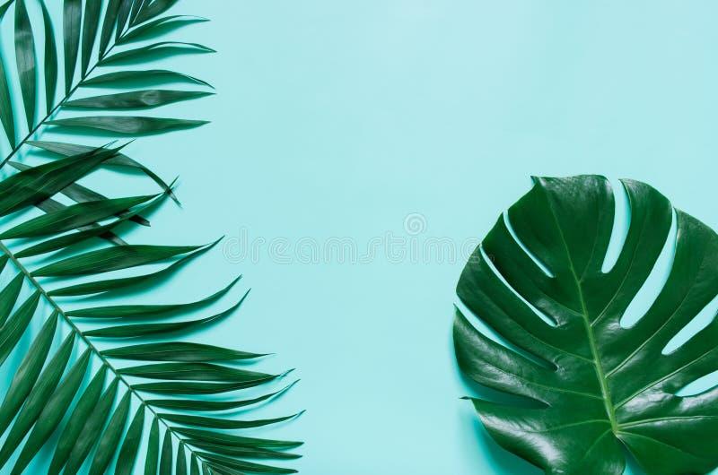 Ветви лист ладони зеленого плоского положения тропические стоковые изображения rf