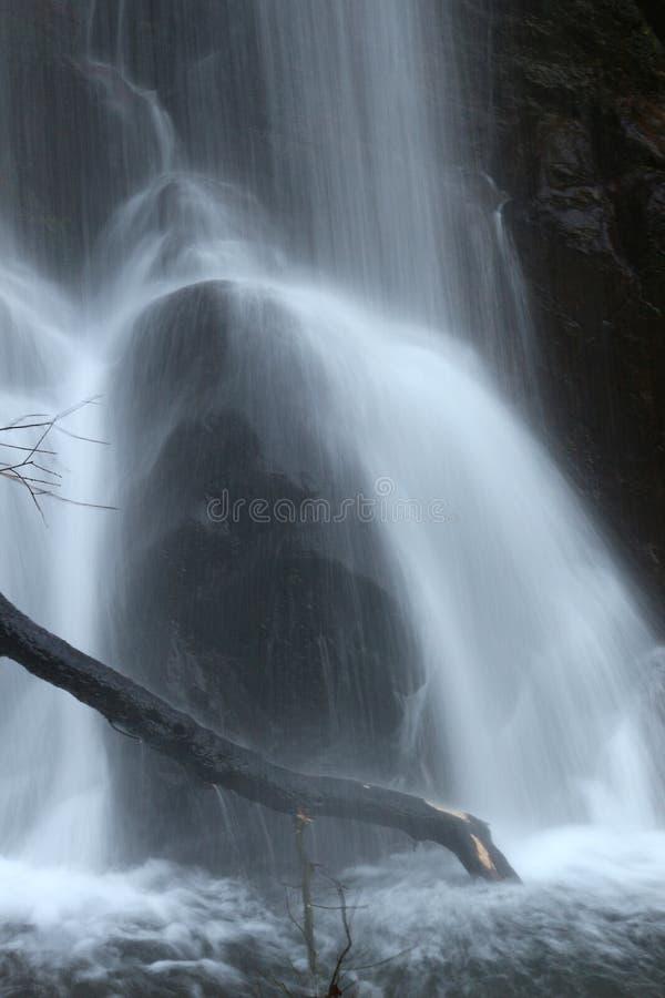 Ветви над движением потока воды стоковая фотография