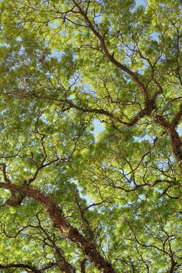Ветви неба стоковые фото