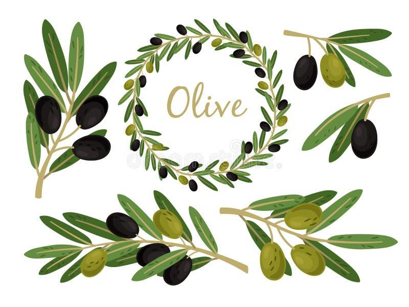 Ветви оливок и прованская крона Греческий набор ветви и венка оливок, хворостины и листья дерева еды масла лета вектора иллюстрация штока