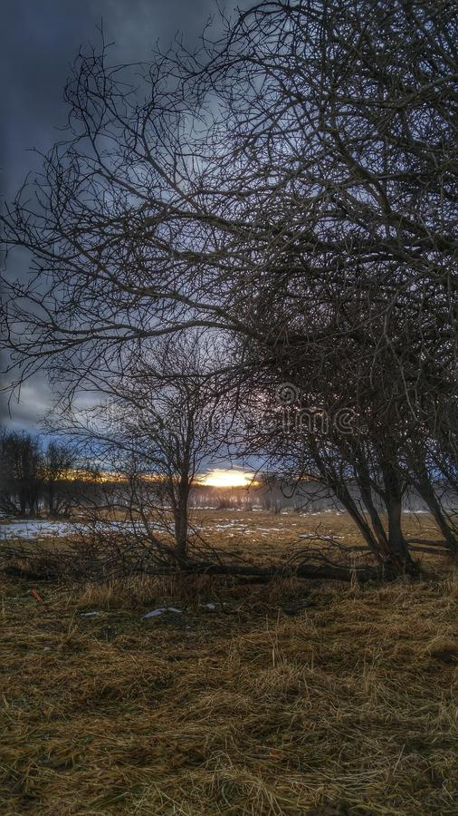 Ветви осени стоковое изображение