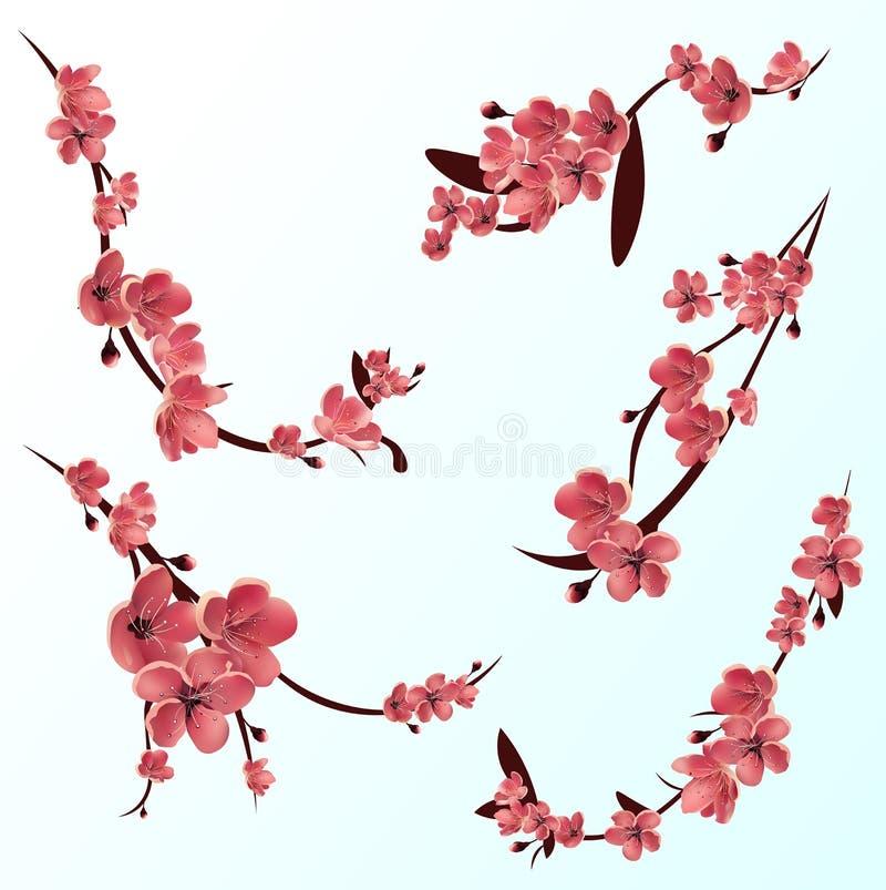 Ветви подняли blossoming Сакура вал sakura вишни японский Вектор изолировал комплект значка бесплатная иллюстрация