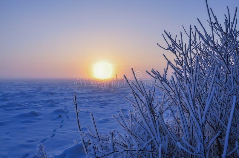 Ветви предусматриванные с белым пушистым заморозком и огромное солнце поднимая от поля снега стоковые фото