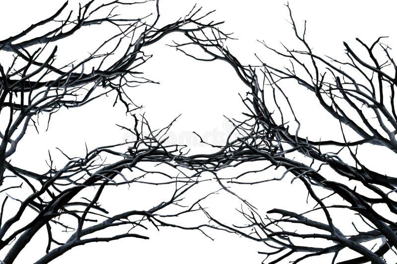 ветви предпосылки изолировали естественную белизну вала стоковые фото