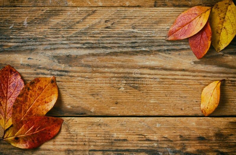 Ветви предпосылки осени с красочным крупным планом листьев стоковые изображения rf