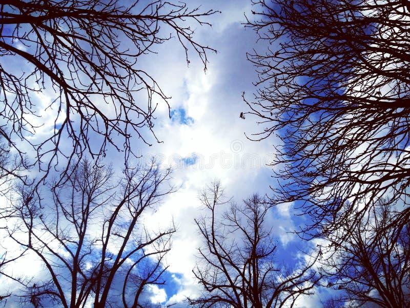 Ветви против неба стоковое изображение