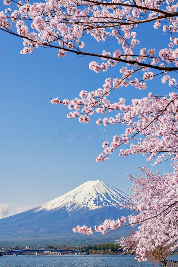Ветви Сакуры горы и пинка Фудзи на Kawaguchiko стоковые изображения rf