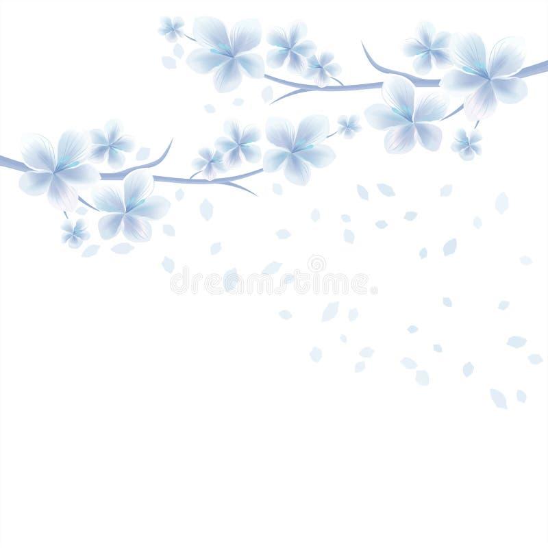 Ветви Сакуры при белые голубые цветки и лепестки летания изолированные на белой предпосылке цветки Apple-вала Цветение вишни бесплатная иллюстрация
