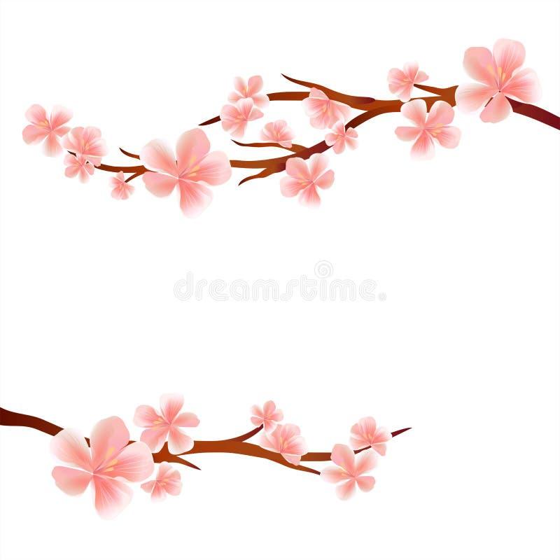 Ветви Сакуры при розовые цветки изолированные на белой предпосылке цветки Apple-вала Цветение вишни Вектор EPS 10, cmyk бесплатная иллюстрация
