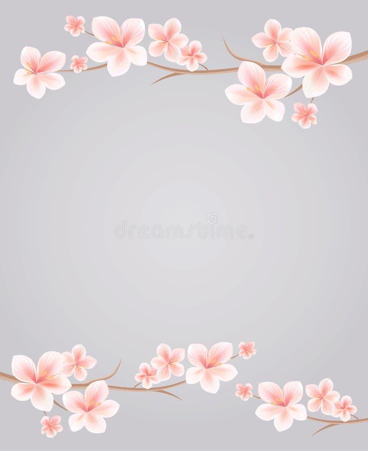 Ветви Сакуры при розовые цветки изолированные на серой предпосылке Цветки Sakura Цветение вишни Вектор EPS 10, cmyk иллюстрация штока