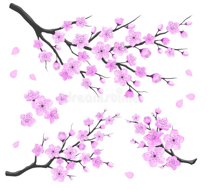 Ветви Сакуры иллюстрация вектора