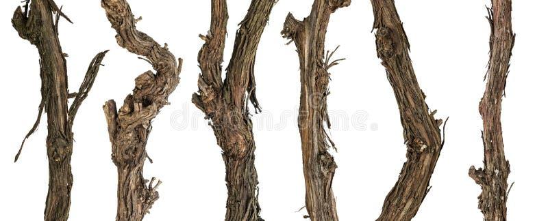 Ветви собрания сухие лозы стоковые фото