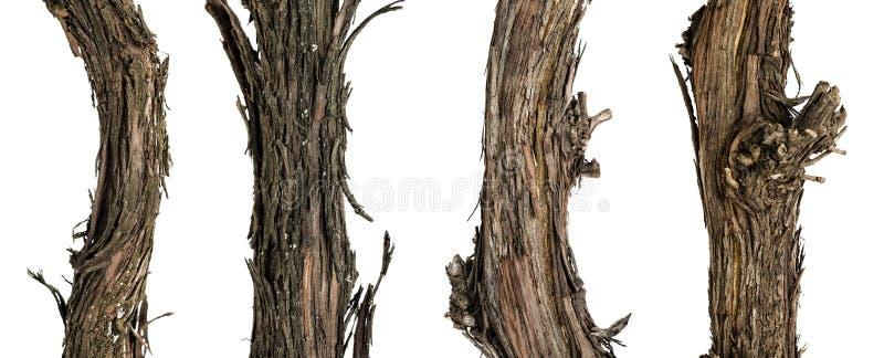 Ветви собрания сухие лозы стоковое изображение