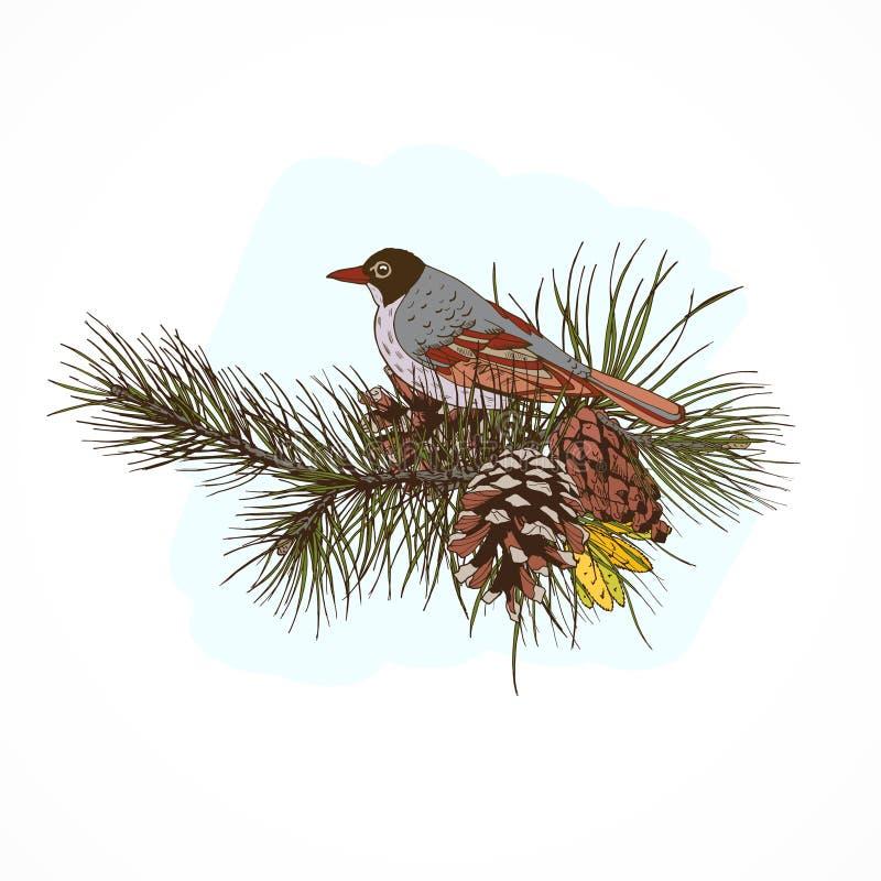 Ветви сосны с птицей иллюстрация вектора