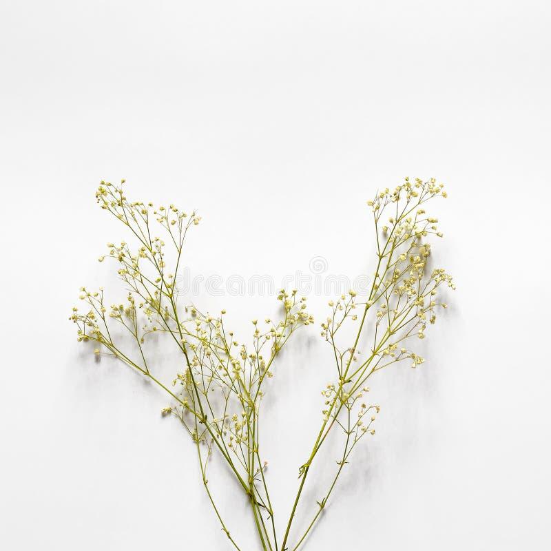 Ветви с небольшими желтыми цветками на белой предпосылке стоковая фотография rf