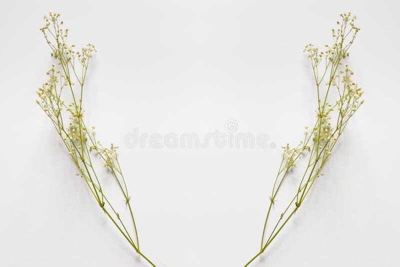 Ветви с небольшими желтыми цветками на белой предпосылке стоковая фотография