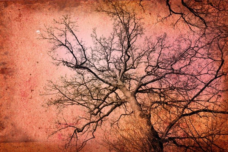 ветви фасонировали старый вал иллюстрация вектора