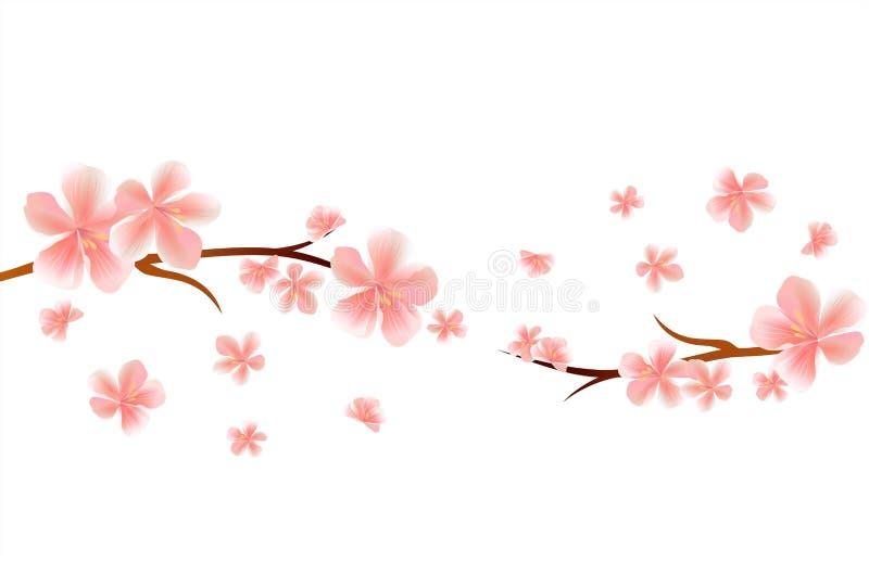 Ветви цветения Сакуры при розовые цветки летания изолированные на белой предпосылке цветки Apple-вала Цветение вишни вектор бесплатная иллюстрация