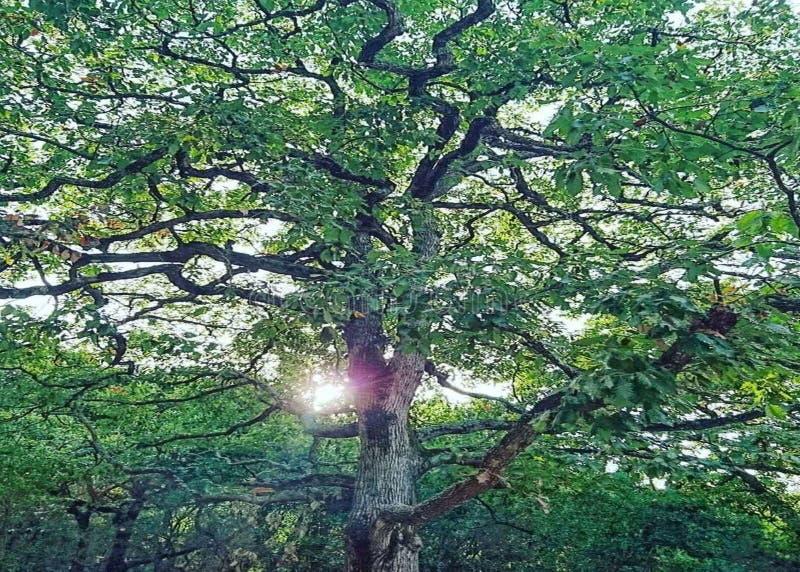 Ветви стоковое изображение