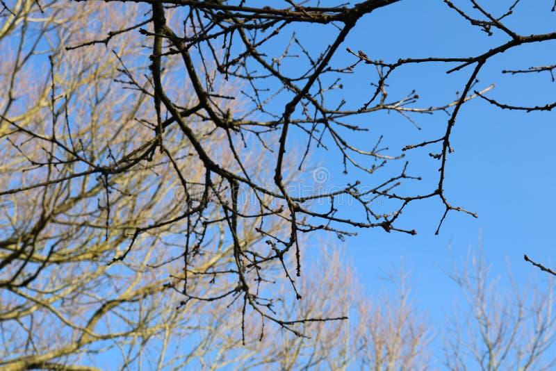 Ветви стоковая фотография rf