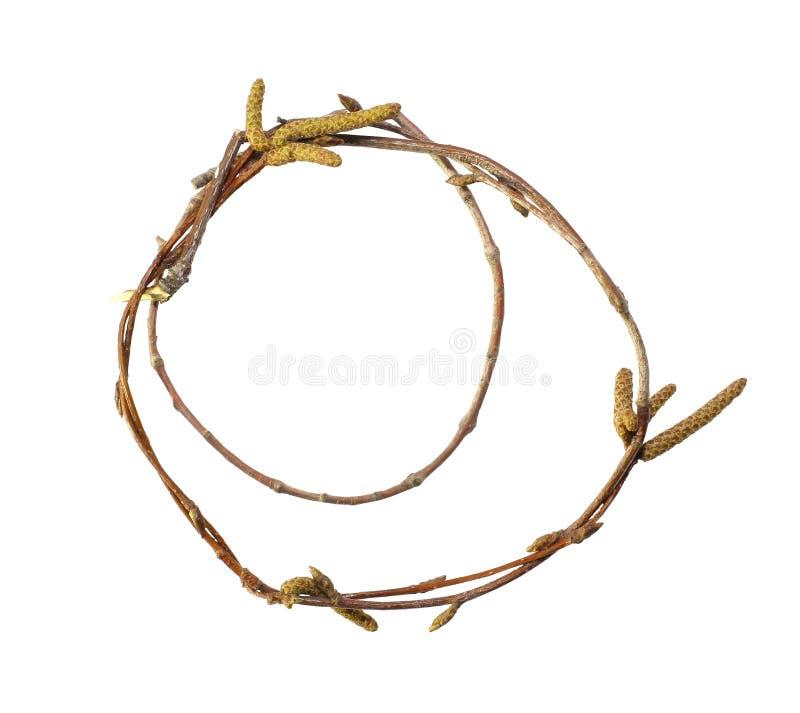 ветвь березы стоковое фото