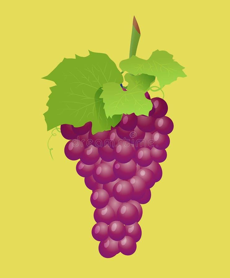 Ветвь виноградины с красными виноградинами Реалистическое illustartion вектора бесплатная иллюстрация