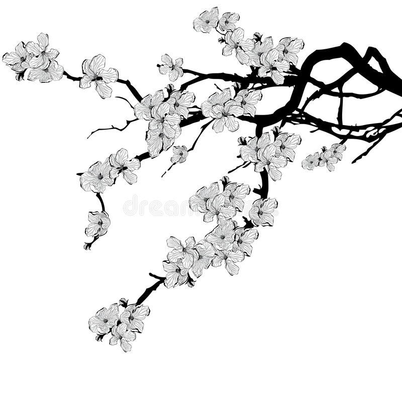 Ветвь вишневого дерева иллюстрация штока