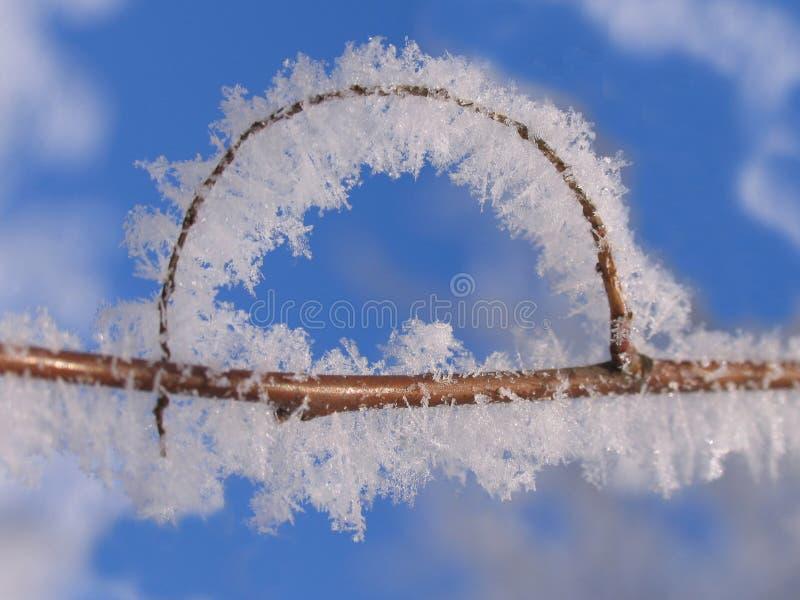Ветвь дерева в заморозке стоковые изображения rf