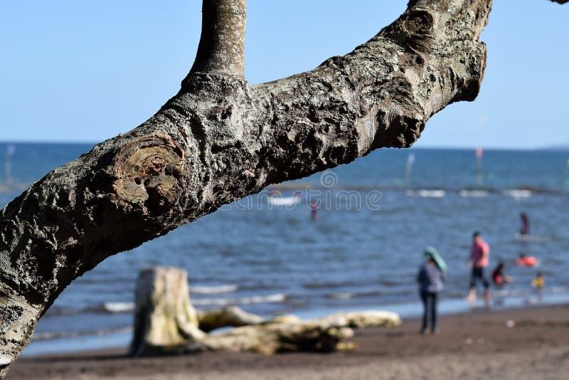 Ветвь дерева затемняет взгляд людей купая на море стоковое фото rf