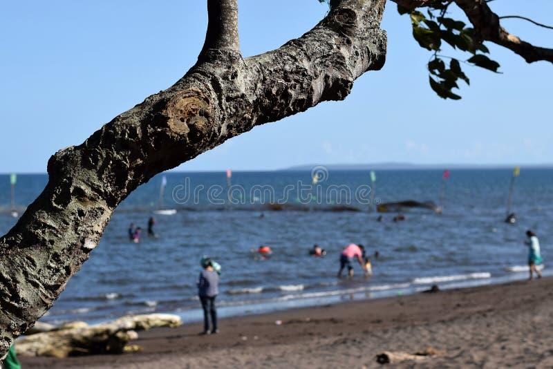 Ветвь дерева затемняет взгляд людей купая на море стоковые изображения rf
