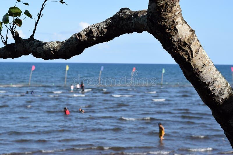 Ветвь дерева затемняет взгляд людей купая на море стоковые изображения