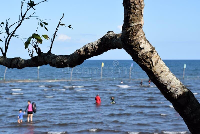 Ветвь дерева затемняет взгляд людей купая на море стоковые фото