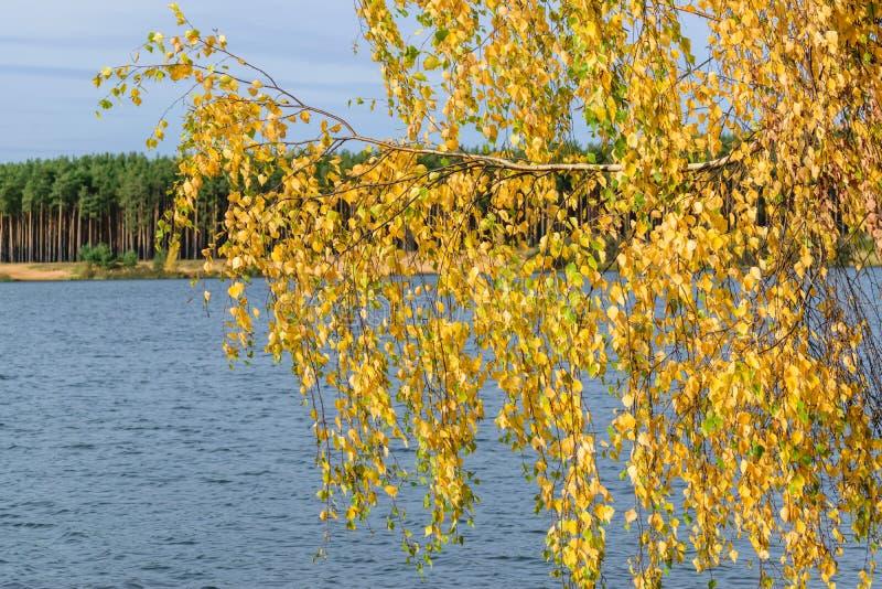 Ветвь дерева согнутая над водой стоковые фотографии rf