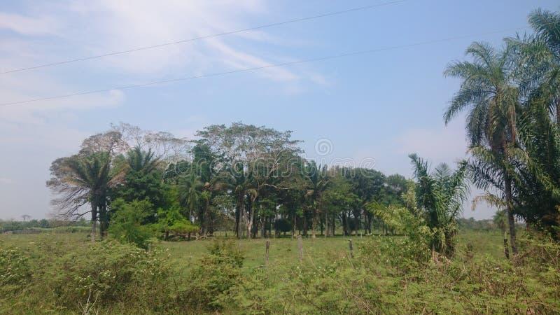 ветвь джунглей стоковые изображения rf