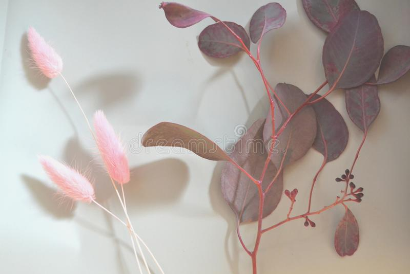 Ветвь евкалипта на столе Нежность цветка стоковые изображения