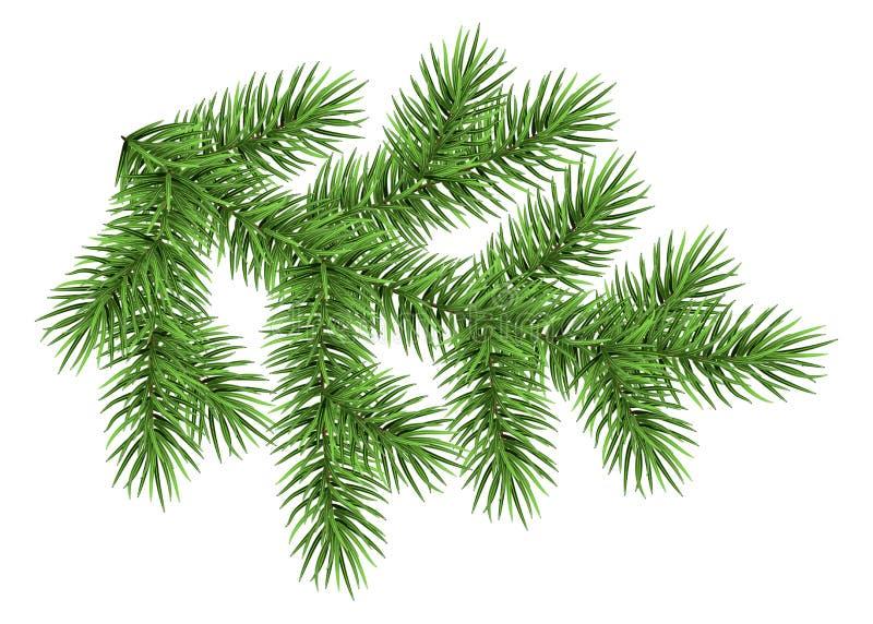 Ветвь ели изолированная на белой предпосылке иллюстрация штока