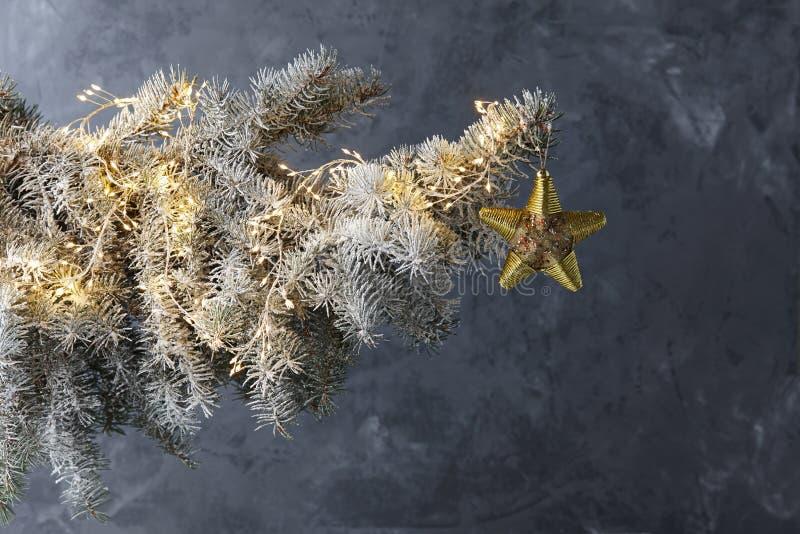Ветвь ели рождества Snowy на ледяной серой предпосылке стоковая фотография rf