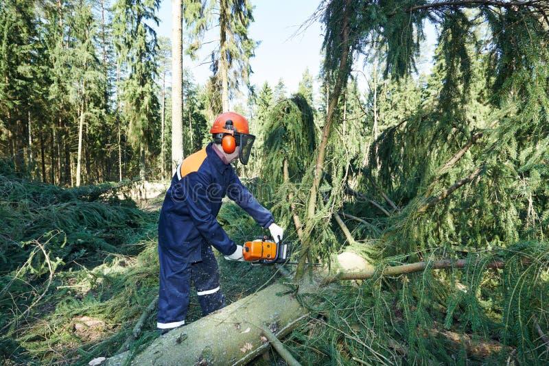 Ветвь дерева вырезывания Lumberjack в лесе стоковые изображения rf